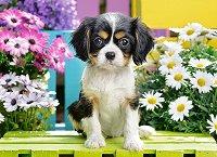 Кученце шпаньол в цветна градина -