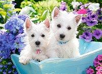 Бели кученца Териери - премиум -