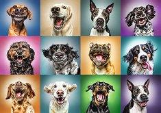 Портрети на кучета -