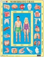 Части на човешкото тяло - Пъзел в картонена подложка - пъзел
