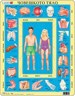 Части на човешкото тяло - пъзел