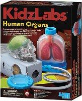 """Човешките органи - Детски образователен комплект от серията """"Kidz Labs"""" -"""