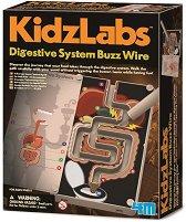 """Звънчева инсталация на храносмилателната система - Детски образователен комплект от серията """"Kidz Labs"""" - играчка"""