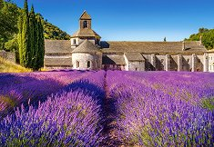 Лавандулово поле в Прованс, Франция - пъзел
