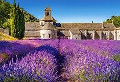 Лавандулово поле в Прованс, Франция -