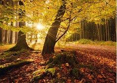 """Есенна магия - Щефан Хефеле (Stefan Hefele) : От колекцията """"Premium Quality"""" - пъзел"""