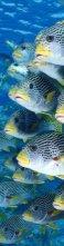 3D книгоразделител - Риби -