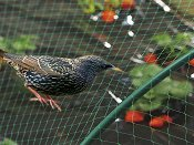 Защитна мрежа против птици