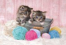 Котенца с прежда - пъзел