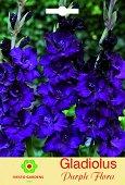 Луковици от Гладиол - Purple Flora - Опаковка от 3 броя