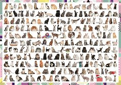208 котки - пъзел