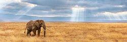 Изгубен слон в Саваната - панорама -