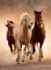 Препускащи коне -