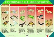 Двустранно табло по човекът и природата за 4. клас - № 2: Групиране на животни. Хранене и дишане на човека -