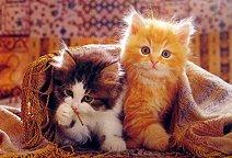"""Котета - От колекцията """"Animal"""" - пъзел"""