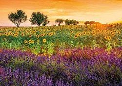 Слънчогледи и лавандула -