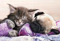 Сладки сънища -