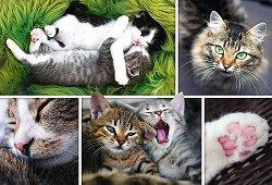 Котешки истории -