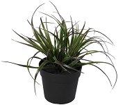 Декоративно растение - Тиландсия