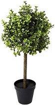 Декоративно дърво - Чемшир