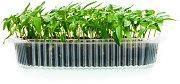 Съд за отглеждане на микро растения