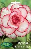 Луковица от Бегония - Bouton de Rose