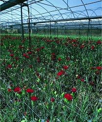 Мрежа за поддържане на цветя - Trellinet