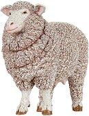 Мериносова овца -