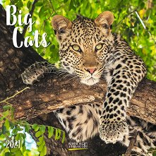Стенен календар - Big Cats 2021 -