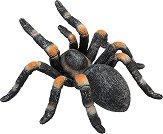 Мексиканска червеноколенеста тарантула - фигура