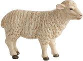 Овца -