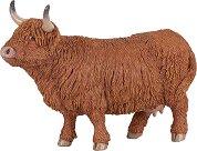 Шотландско високопланинско говедо - фигура
