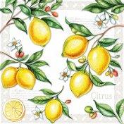 Салфетки за декупаж - Лимони - Пакет от 20 броя
