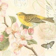 Салфетки за декупаж - Птица и цвят - Пакет от 20 броя