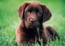 Кученце - пъзел