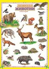 Учебно табло: Дивите животни в България -