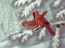 Рисуване по номера с акрилни бои - Птици северни кардинали - Комплект за картина с размери 39 x 30 cm