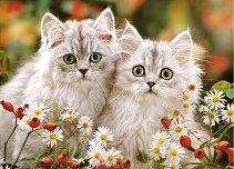 Персийски котки - пъзел