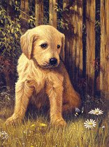 Рисуване по номера с акрилни бои - Кученце - Комплект за картина с размери 22 x 30 cm
