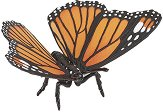 Пеперуда - фигура