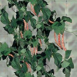 Мрежа за поддържане на растения и зеленчуци - Flora