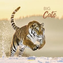 Стенен календар - Big Cats 2022 -
