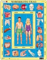 Човешкото тяло - Пъзел в картонена подложка - пъзел