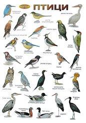 Птици - стенно учебно табло - 52 x 77 cm -