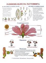 """Едностранно учебно табло : """"Размножаване на растенията"""" -"""