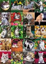 Гальовни котенца - Кейт Кимбърлин (Keith Kimberlin) -