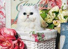 Коте в кошница -
