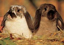 Две зайчета - пъзел