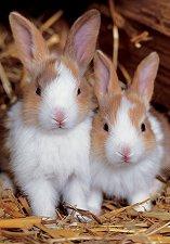 Зайчета - пъзел
