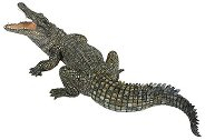 Нилски крокодил - Фигура от серията Диви животни - фигура